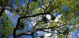 夏の宿り木